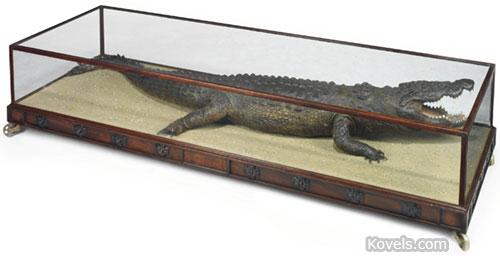 crocodile in glass cabinet