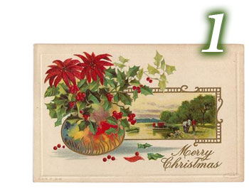 Postcard, Poinsettias in vase